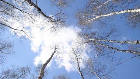 До +25 градусов прогреется воздух наюге Казахстана вовторник