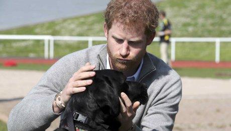 Британский принц Гарри поведал , что множество  лет свыкался со гибелью  матери