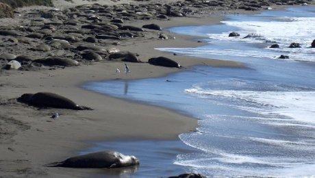 В расследовании гибели тюленей на Каспии помогут ученые из Алматы