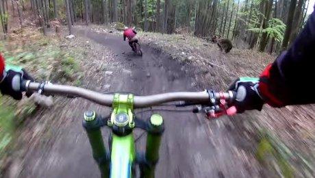 Велосипедисту удалось снять накамеру медведя, гнавшегося заего другом