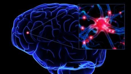 Учёные заставили клетки мозга расти в подходящем направлении