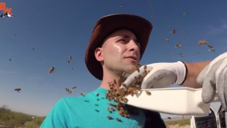 Пчелы искусали лицо исследователю дикой  ...