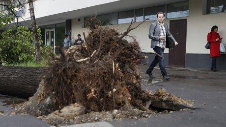 Количество пострадавших от урагана в Москве приблизилось к 140. Количество погибших увеличилось до 13