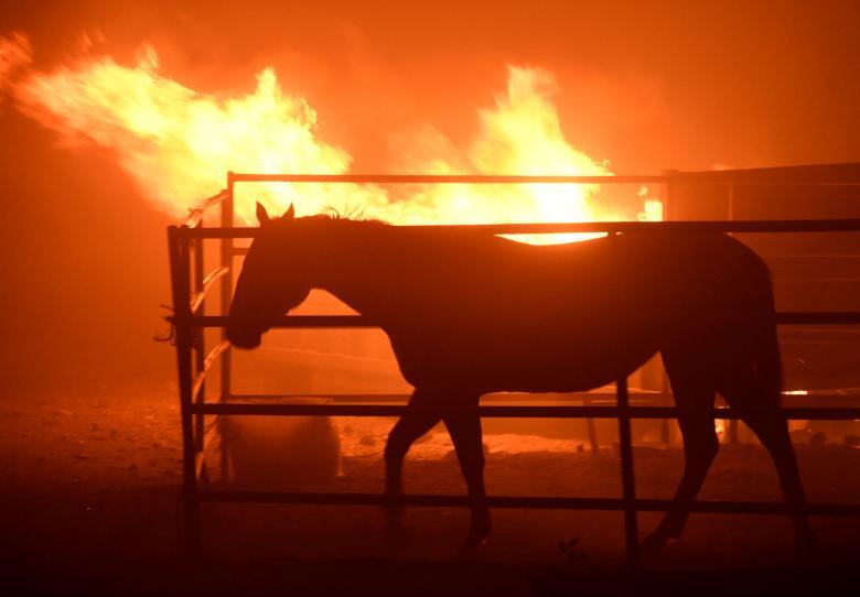 Чрезвычайное положение вКалифорнии: из-за пожаров эвакуировали уже 200 000 человек