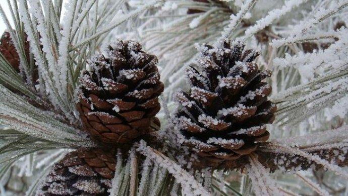 Абыкан: сильный мороз ожидает казахстанцев впраздничные дни