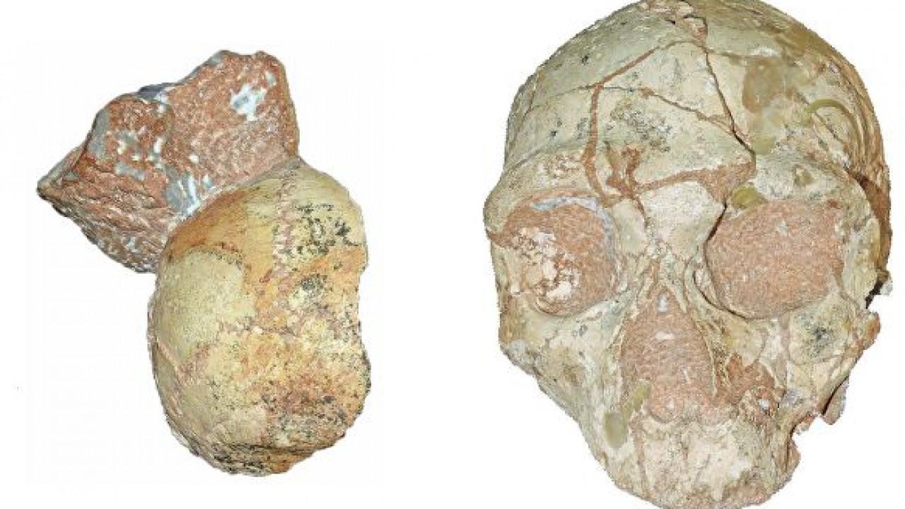 Ученые сделали громкое объявление  подревним останкам Homo sapiens