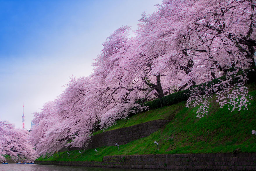 лестница металлическом самые красивые фото весны в мире пока надеется
