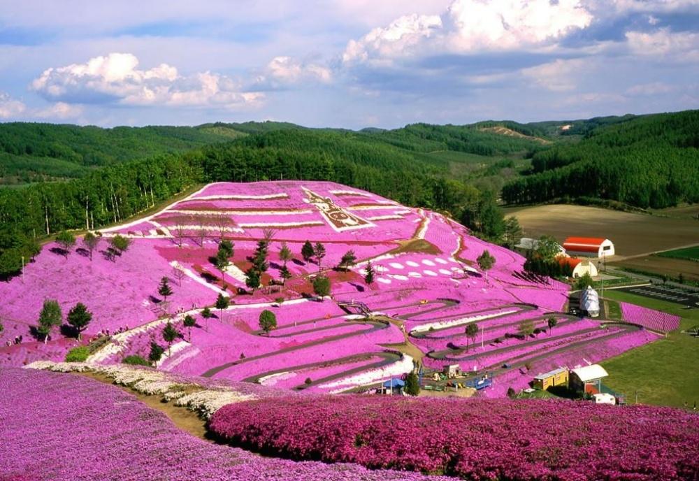 шейном фотографии всех цветов на планете лишь потом