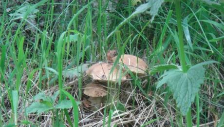Алматинцам запретили бесплатно собирать дикие ягоды и грибы