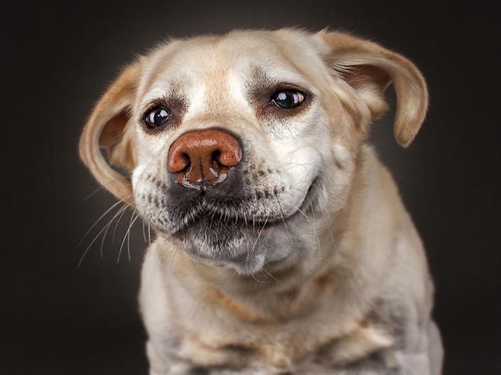 Собачка картинка прикольная