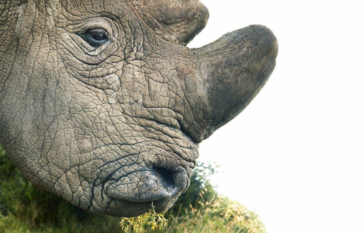 Вымирающие животные мира с фото