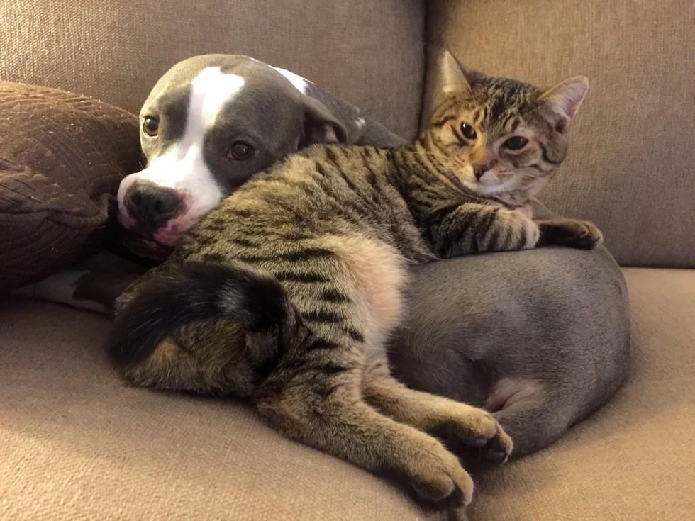 смотреть картинки коты и собаки построить модель