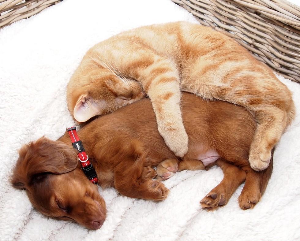 Картинки прикольных котят и щенков