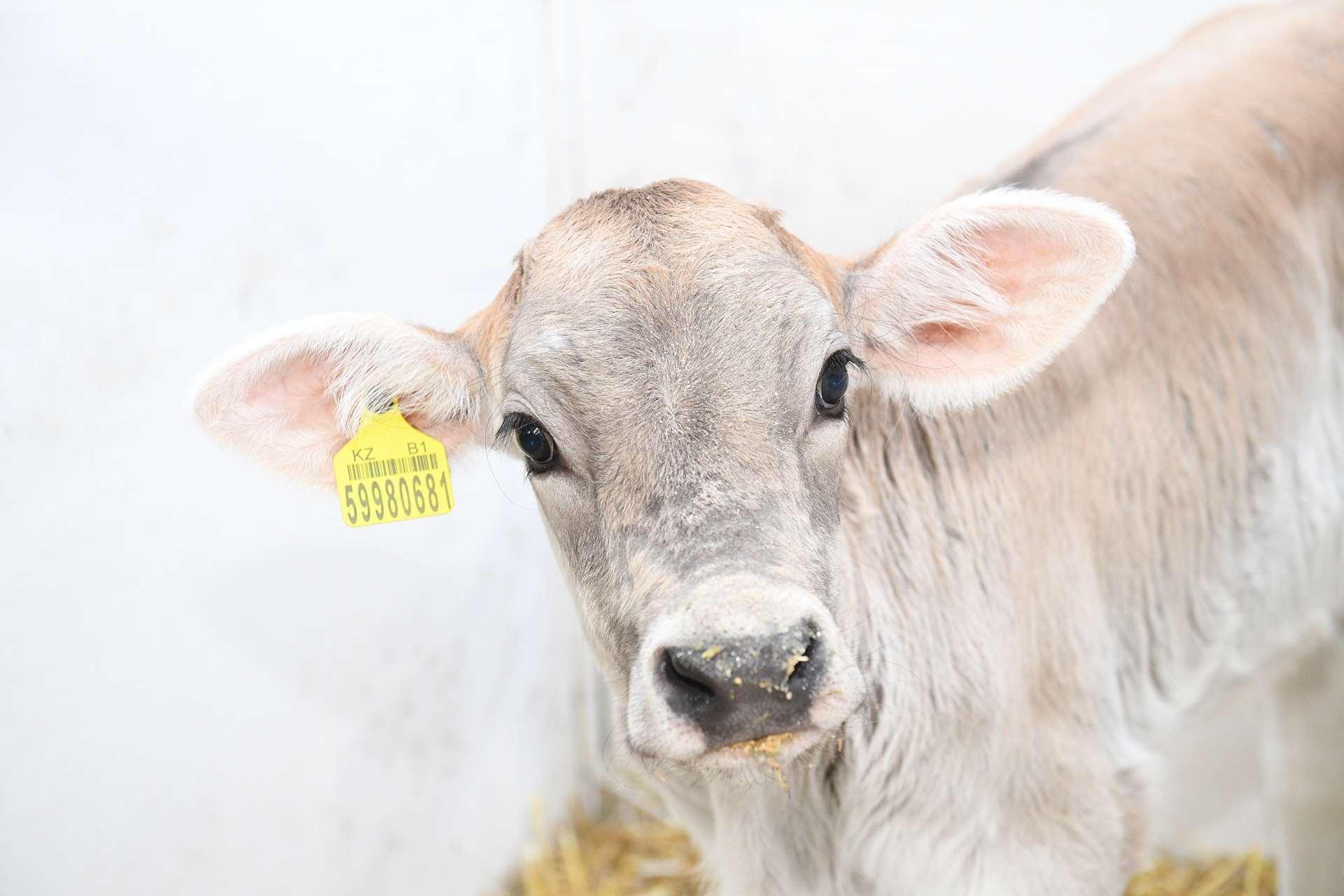 знакомство с работой мясного цеха