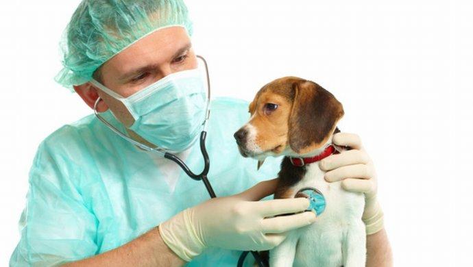 Картинки по запросу картинки услуги ветеринарии
