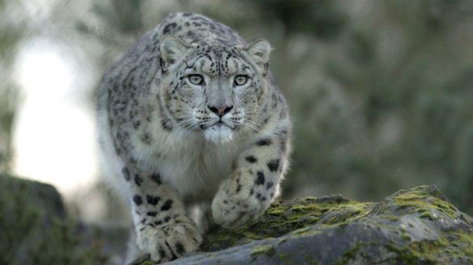 Фото: forum.zoologist.ru