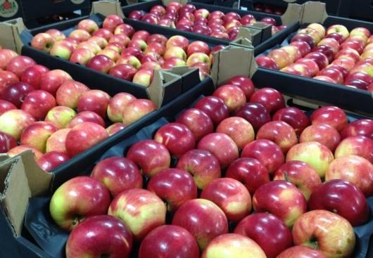 Особенности поставки овощей на экспорт спортивные прогнозы от профессионала