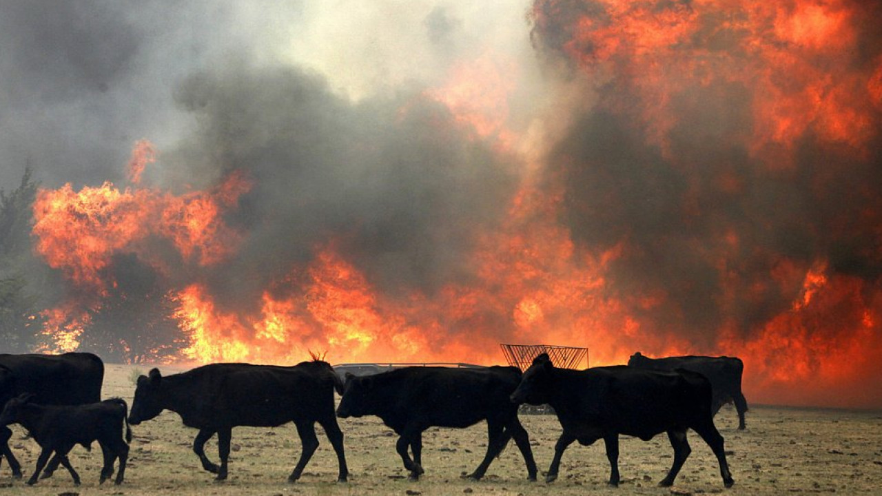 Пожар уничтожил почти сто голов скота в Жамбылской области