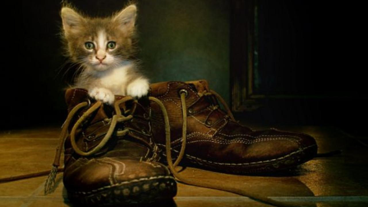 Как вывести кошачий запах из обуви Самые действенные методы