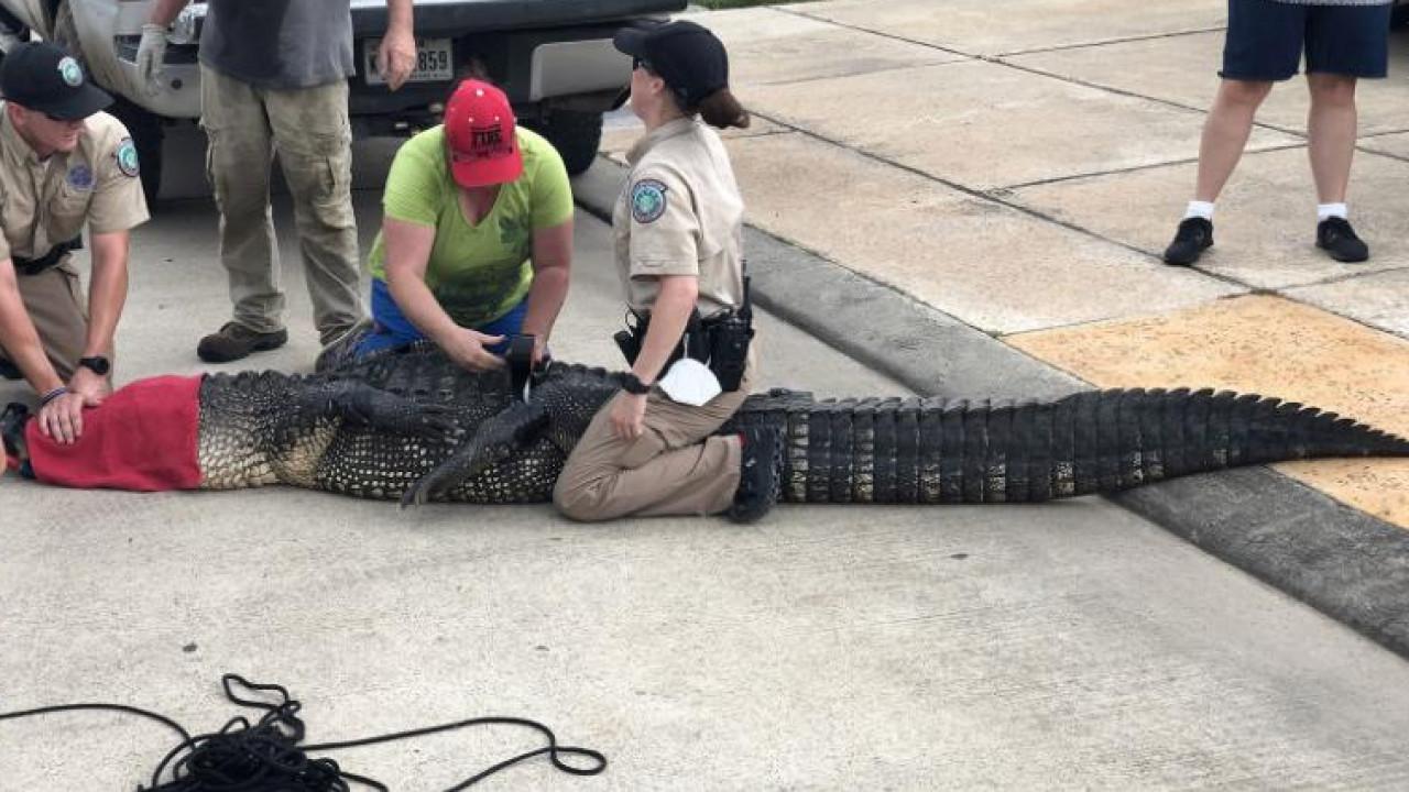 сравнительно новая гифка крокодил крокожу и буду крокодить самые крепкие стебельки
