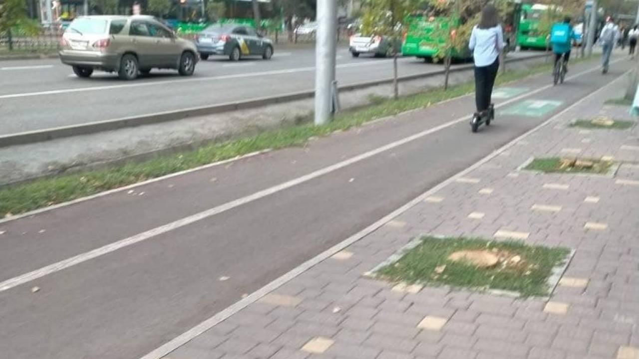 В Алматы вырубили 27 деревьев по проспекту Абая