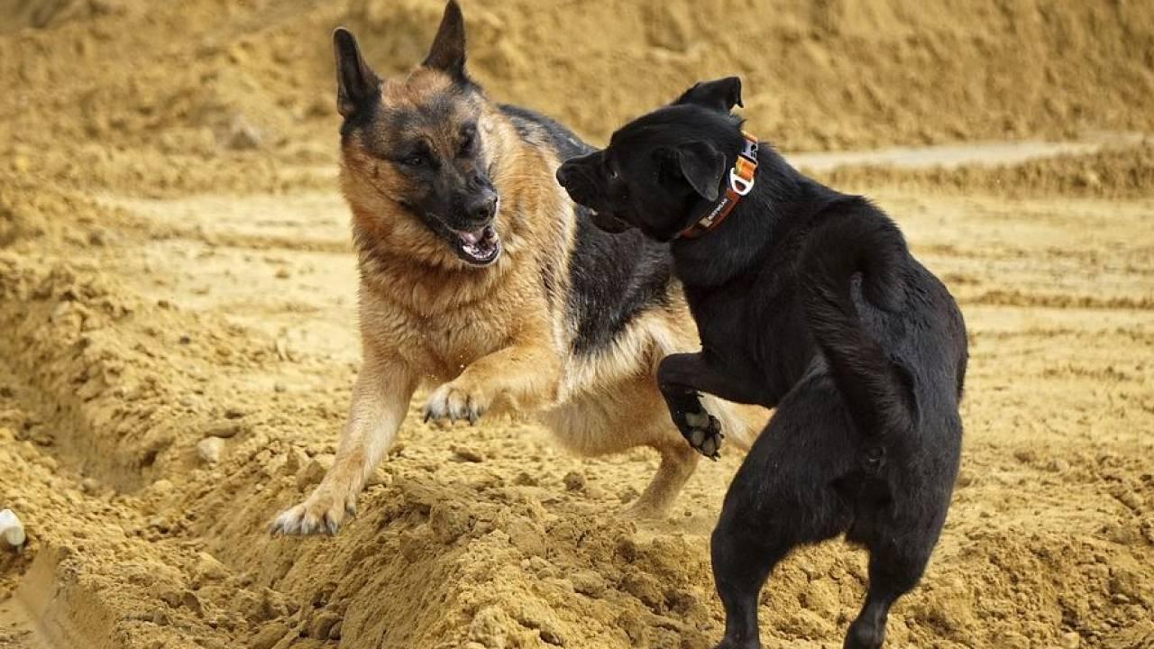 Закон о защите животных: запретят ли проводить национальные виды спорта